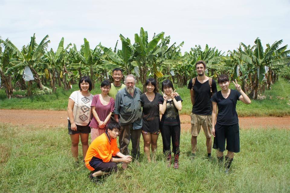 banana farm2